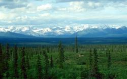 A maior floresta boreal do mundo está em grande risco