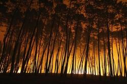 Incêndios: 2009 foi o pior ano desde 2005, em Portugal