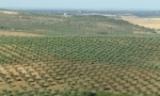 Cinco Mil hectares convertidos em Olivais biológicos