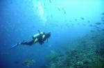 Mergulhadores recolhem lixo do mar