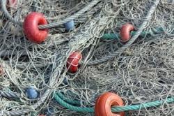 Cientistas exigem que se parem as pescas