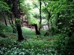 Portugal: 42 por cento de área florestal